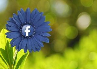 Objectors Appeal Fraley v. Facebook Privacy Settlement - Harvard ...